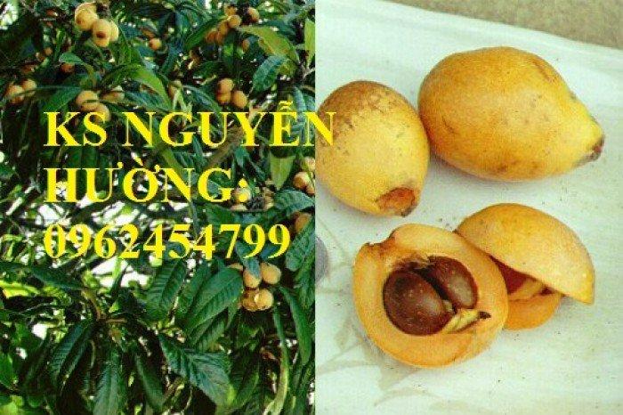 Cây giống biwa, cung cấp cây giống chất lượng, địa chỉ cung cấp cây, giao cây toàn quốc2