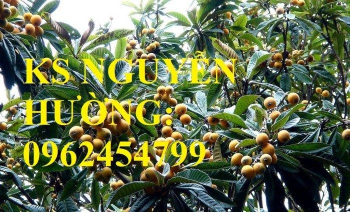 Cây giống biwa, cung cấp cây giống chất lượng, địa chỉ cung cấp cây, giao cây toàn quốc3