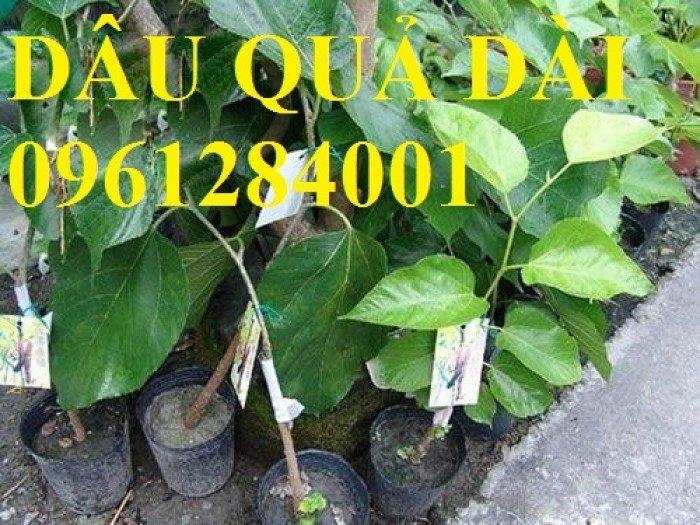 Cây dâu quả dài, cung cấp cây giống dâu quả dài chất lượng. Địa chỉ cung cấp cây giống toàn quốc3