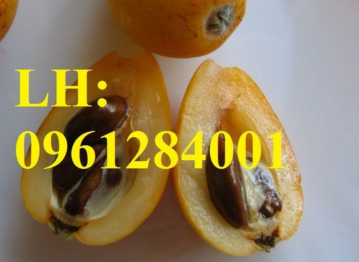 Cung cấp cây giống biwa toàn quốc, cây giống đảm bảo chất lượng, giao cây toàn quốc5