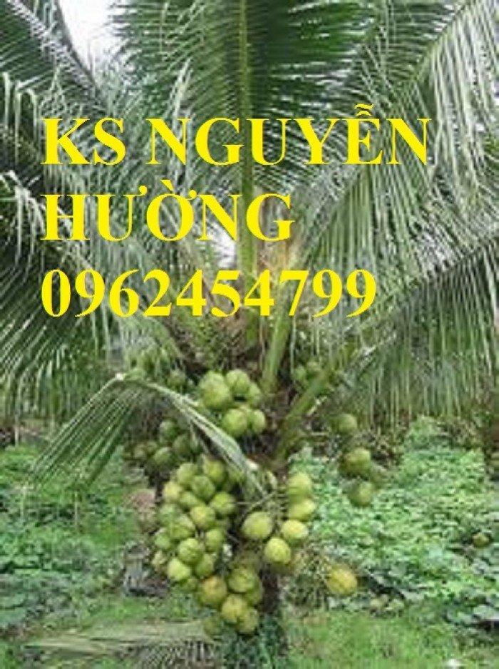 Dừa xiêm lùn, dừa xiêm xanh lùn, dừa xiêm đỏ lùn. Địa chỉ cung cấp cây giống toàn quốc0