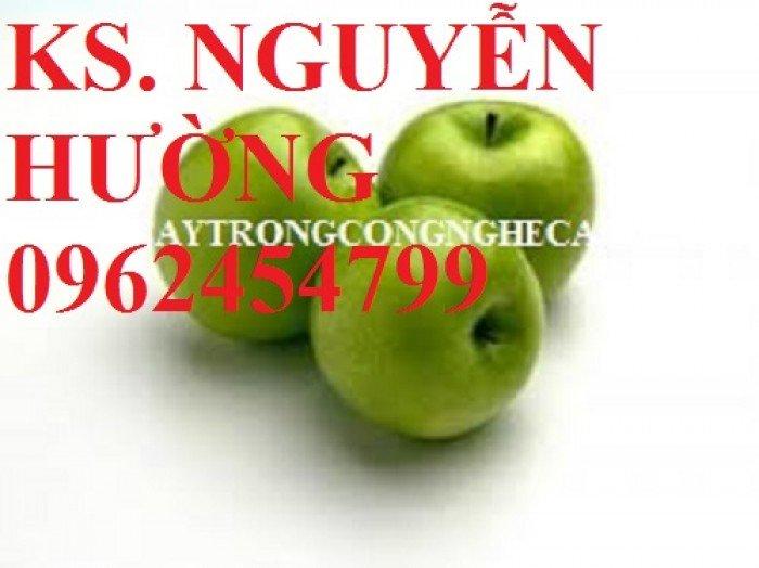Táo ngọt d28, táo ngọt cho năng suất cao. Địa chỉ cung cấp cây giống toàn quốc3