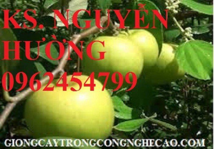 Táo ngọt d28, táo ngọt cho năng suất cao. Địa chỉ cung cấp cây giống toàn quốc6