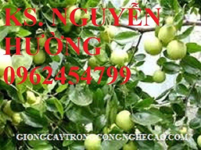 Táo ngọt d28, táo ngọt cho năng suất cao. Địa chỉ cung cấp cây giống toàn quốc4