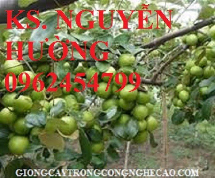 Táo ngọt d28, táo ngọt cho năng suất cao. Địa chỉ cung cấp cây giống toàn quốc1