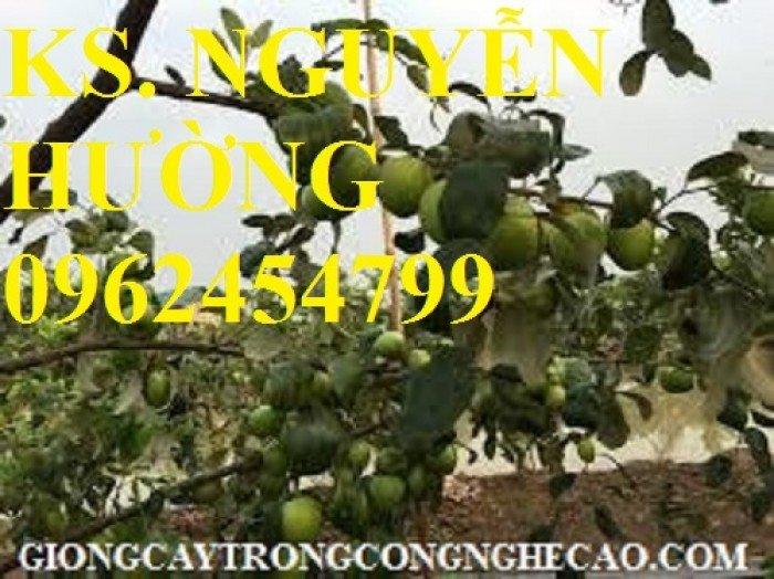 Táo ngọt d28, táo ngọt cho năng suất cao. Địa chỉ cung cấp cây giống toàn quốc2
