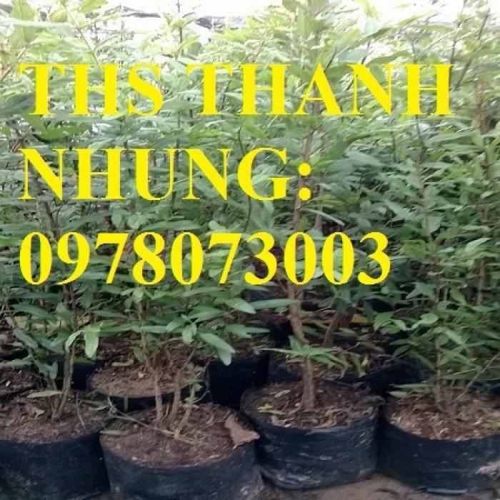 Trung tâm cung cấp cây giống lựu, cây lựu lùn ấn độ. Cây giống đảm bảo chất lượng, giao cây toàn quốc1