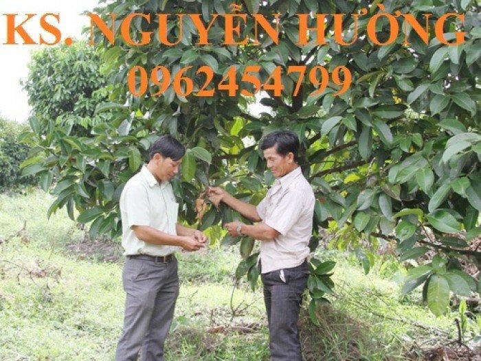 Cây giống măng cụt, quả măng cụt. cung cấp cây giống măng cụt cho năng suất cao, giao cây toàn quốc7