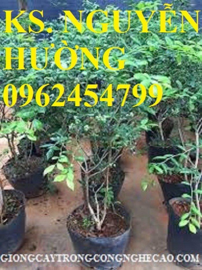 Cây giống việt quất, quả việt quất, trung tâm cung cấp cây giống việt quất, giao cây toàn quốc0