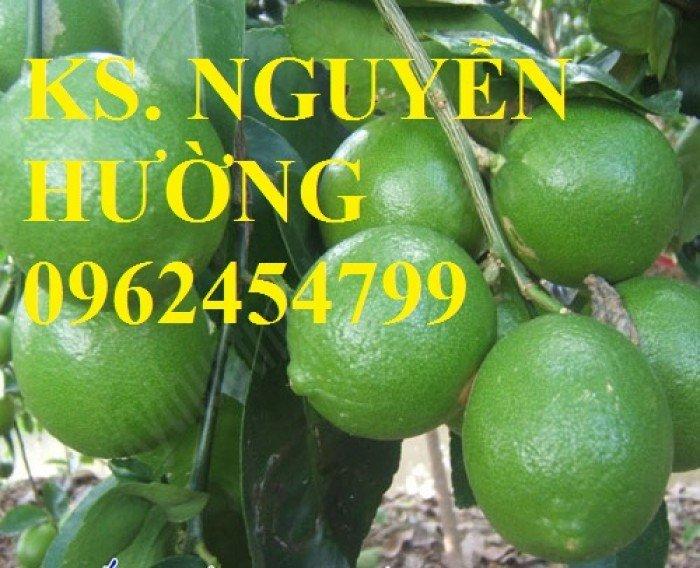 Cung cấp giống cây chanh tứ quý, chanh đào, chanh không hạt, cây giống chất lượng, giao cây toàn quốc1