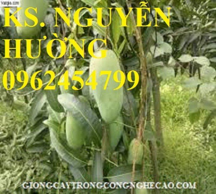 Cung cấp cây giống xoài thái miền nam, xoài thái, xoài thái tím, giao cây toàn quốc1