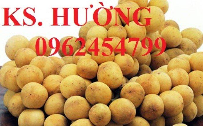Cung cấp cây giống ăn quả, cây bòn bon, cây dâu da đất, cây lòn bon, giao cây toàn quốc22