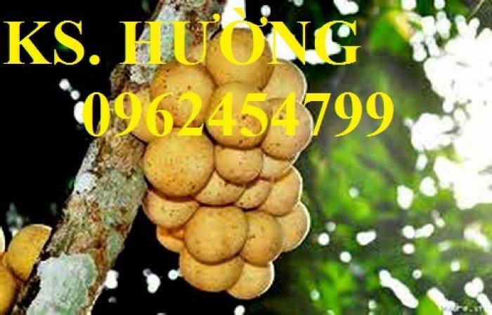 Cung cấp cây giống ăn quả, cây bòn bon, cây dâu da đất, cây lòn bon, giao cây toàn quốc20