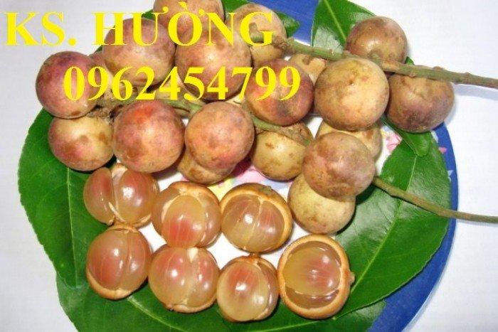 Cung cấp cây giống ăn quả, cây bòn bon, cây dâu da đất, cây lòn bon, giao cây toàn quốc13