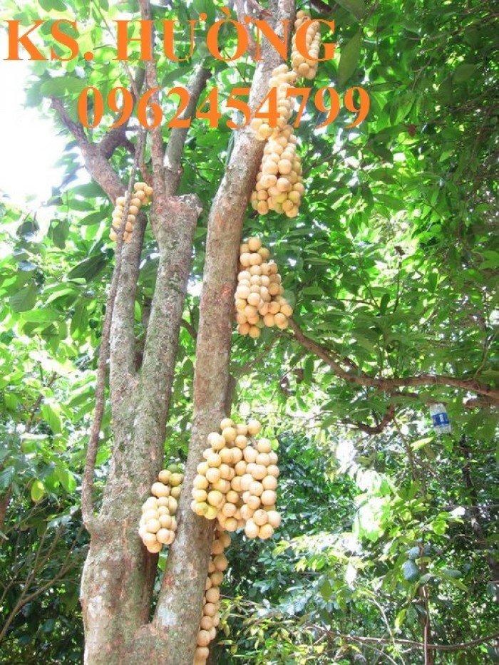 Cung cấp cây giống ăn quả, cây bòn bon, cây dâu da đất, cây lòn bon, giao cây toàn quốc1