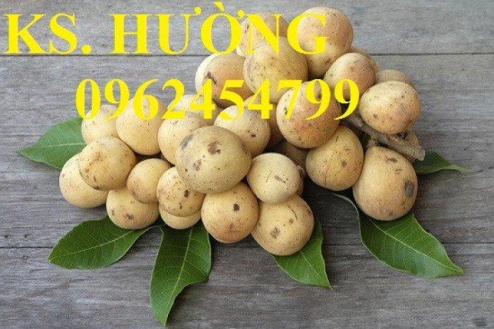 Cung cấp cây giống ăn quả, cây bòn bon, cây dâu da đất, cây lòn bon, giao cây toàn quốc19