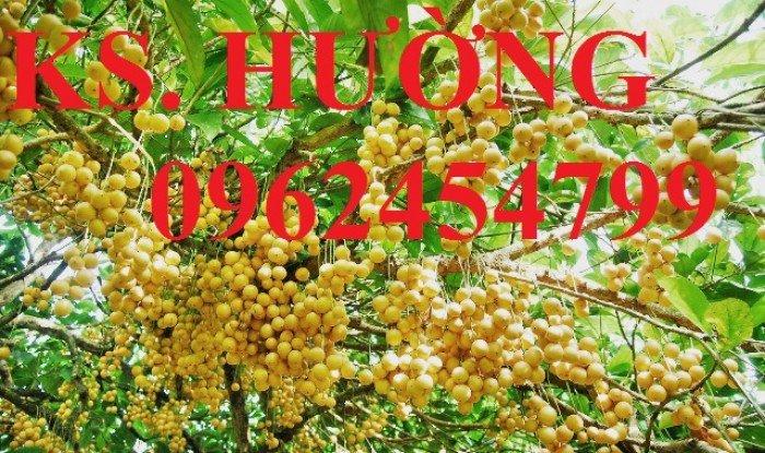 Cung cấp cây giống ăn quả, cây bòn bon, cây dâu da đất, cây lòn bon, giao cây toàn quốc18