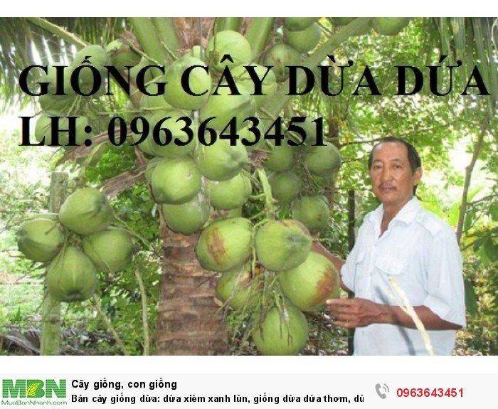 Bán cây giống dừa: dừa xiêm xanh lùn, giống dừa dứa thơm, dừa xiêm dứa Thái Lan, dừa dứa Thái Lan chuẩn, uy tín0