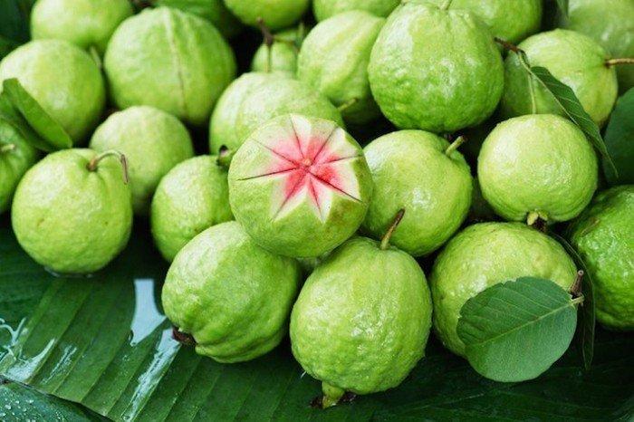 bán giống cây ăn quả, cây ổi ruột đỏ không hạt, ổi ruby, ổi ruột đỏ đài loan2