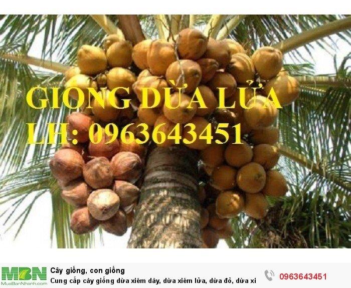 Cung cấp cây giống dừa xiêm dây, dừa xiêm lửa, dừa đỏ, dừa xiêm xanh lùn, dừa chùm chuẩn, uy tín0
