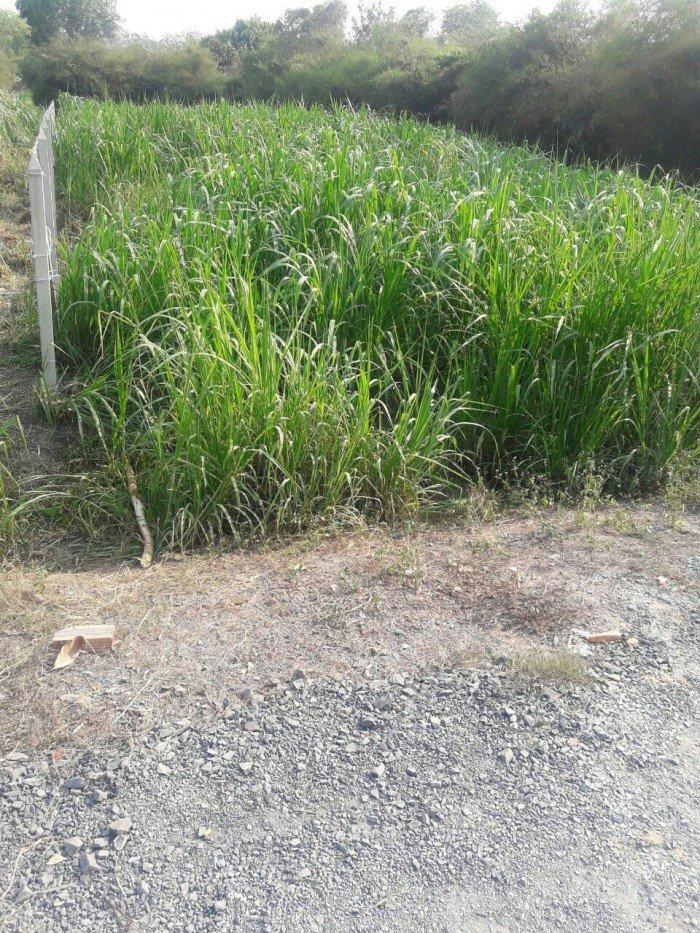 Đất 20m x 30m có 300m2 thổ cư đường trải đá 6m thuộc xã Phú Hòa Đông
