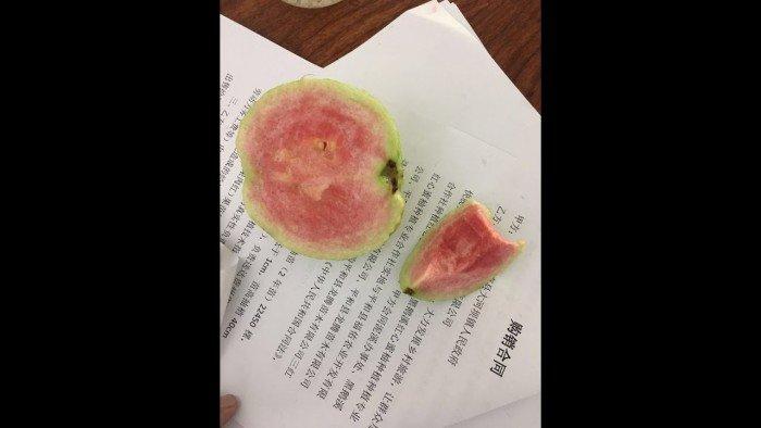 bán giống cây ăn quả cây ổi ruột đỏ không hạt, cung cấp số lượng lớn2