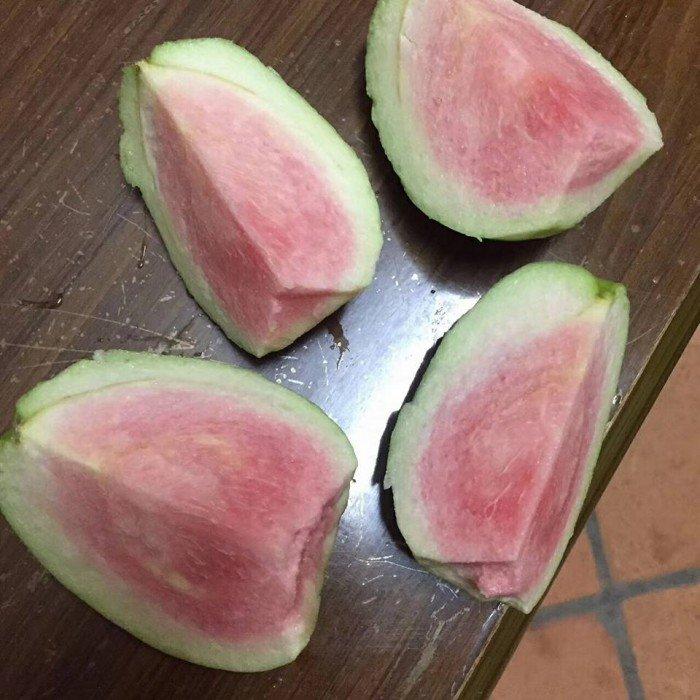bán giống cây ăn quả cây ổi ruột đỏ không hạt, cung cấp số lượng lớn1