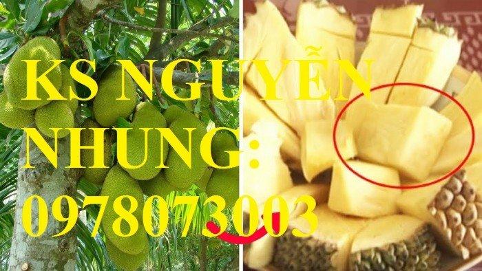 [6] Giong cây trồng công nghệ cao cung cấp mít trái dài, mít ruột đỏ, mít không hạt, cây giống cho năng suất cao