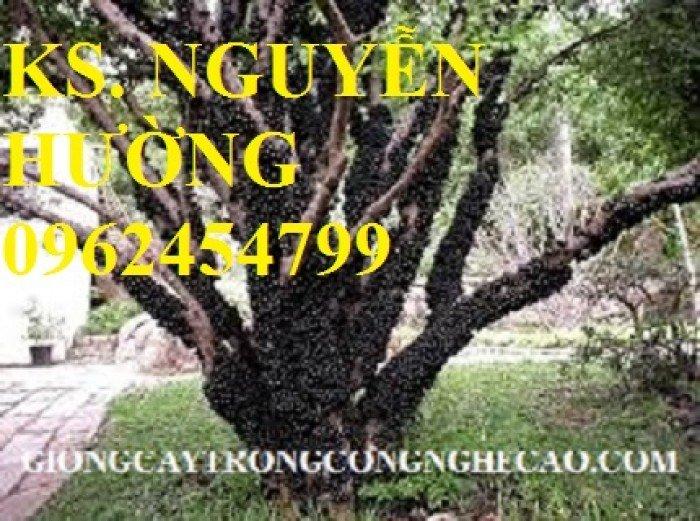 Cung cấp cây giống nho thân gỗ, trung tâm cung cấp cây giống chất lượng cho năng suất cao - giao cây toàn quốc3