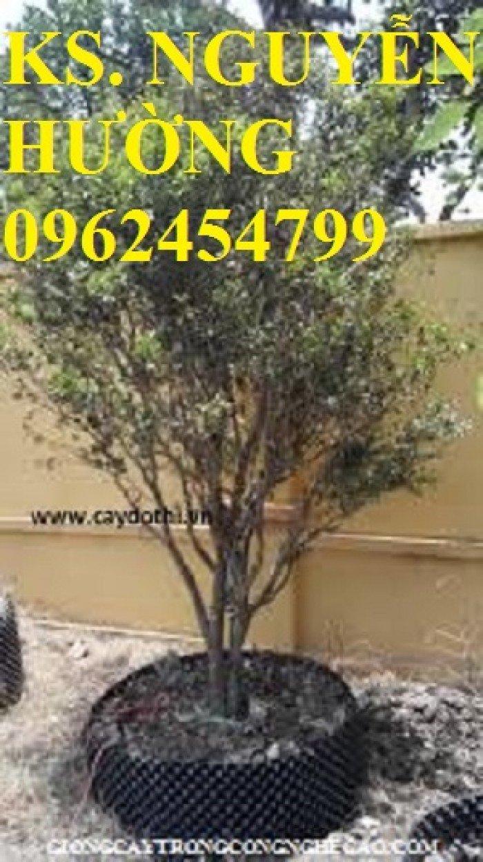 Cung cấp cây giống nho thân gỗ, trung tâm cung cấp cây giống chất lượng cho năng suất cao - giao cây toàn quốc0