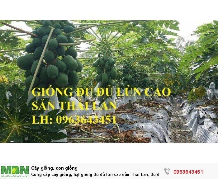 Cung cấp cây giống, hạt giống đu đủ lùn cao sản Thái Lan, đu đủ lùn siêu lùn siêu quả, đu đủ lùn Thái ruột vàng5