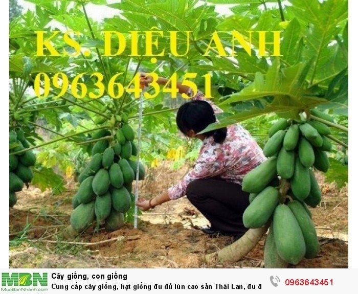 Cung cấp cây giống, hạt giống đu đủ lùn cao sản Thái Lan, đu đủ lùn siêu lùn siêu quả, đu đủ lùn Thái ruột vàng7