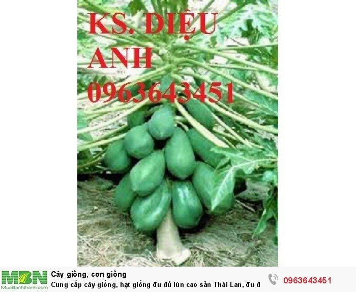 Cung cấp cây giống, hạt giống đu đủ lùn cao sản Thái Lan, đu đủ lùn siêu lùn siêu quả, đu đủ lùn Thái ruột vàng9