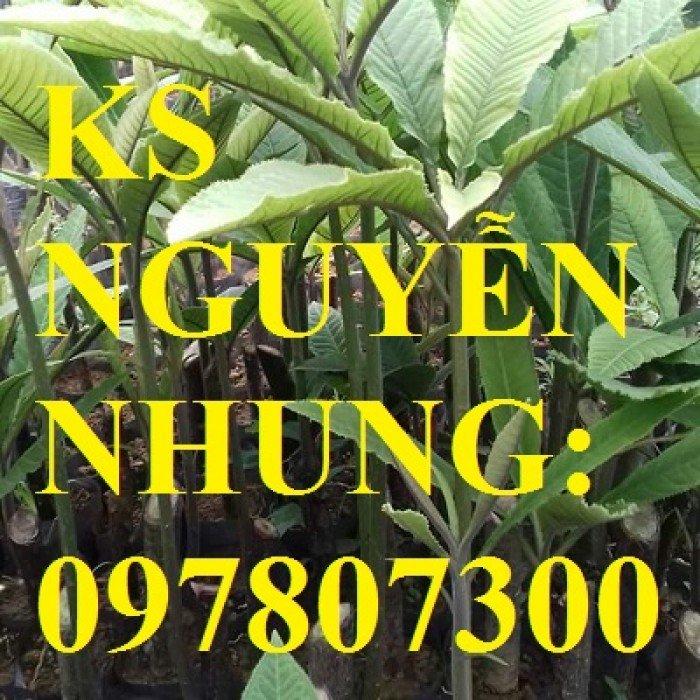 Cung cấp giống cây dược liệu, cây khôi nhung, cây đẳng sâm, cây đương quy, giao cây toàn quốc3