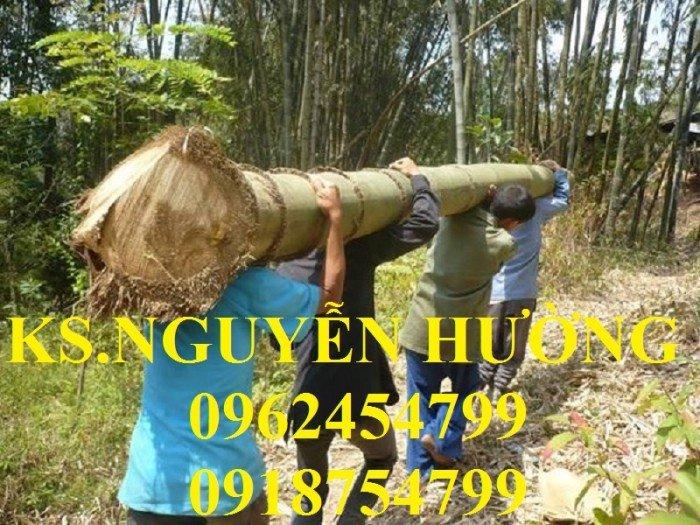 Cung cấp cây giống tre khổng lồ, tre thái lan, cây giống chất lượng cho năng suất cao, giao cây toàn quốc3