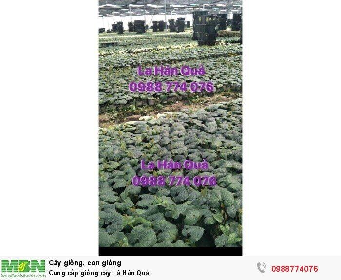 Cung cấp giống cây La Hán Quả0