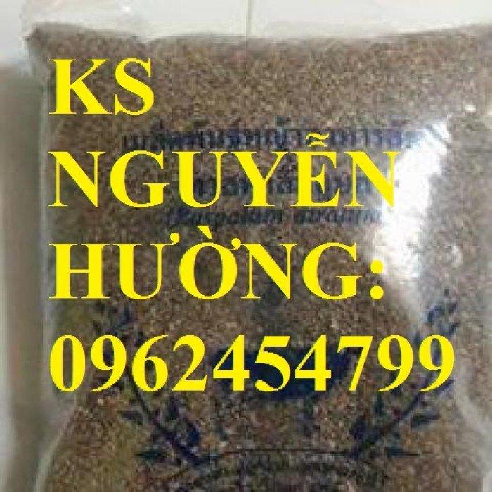 Cung cấp giống cỏ Ubon Paspalum, cỏ chịu ngập, cỏ chịu nước, hạt giống cỏ chịu ngập, giao cây toàn3