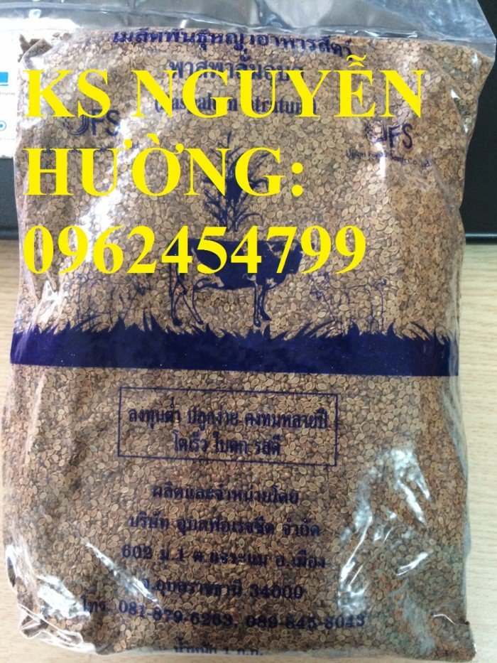 Cung cấp giống cỏ Ubon Paspalum, cỏ chịu ngập, cỏ chịu nước, hạt giống cỏ chịu ngập, giao cây toàn0
