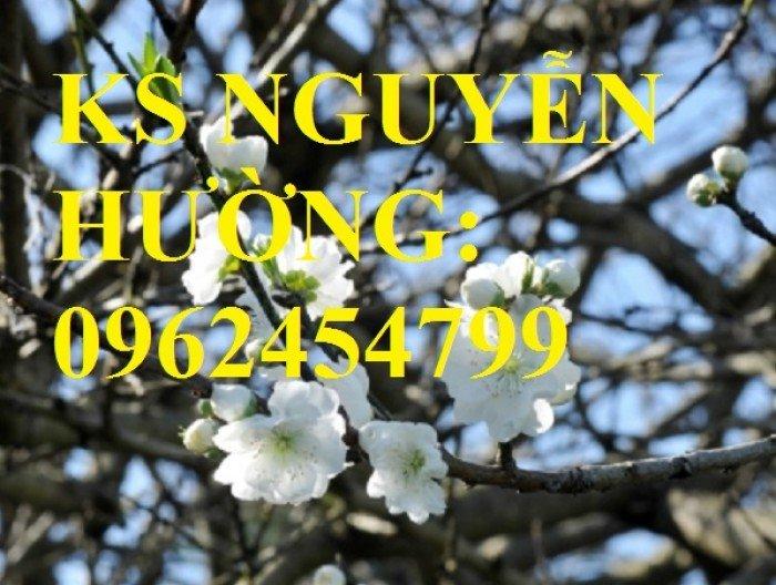 Cung cấp cây giống đào bạch, cây giống đào trắng, địa chỉ cung cấp cây chất lượng - giao cây toàn quốc1