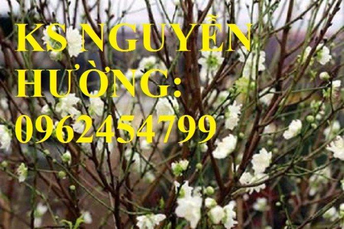 Cung cấp cây giống đào bạch, cây giống đào trắng, địa chỉ cung cấp cây chất lượng - giao cây toàn quốc2