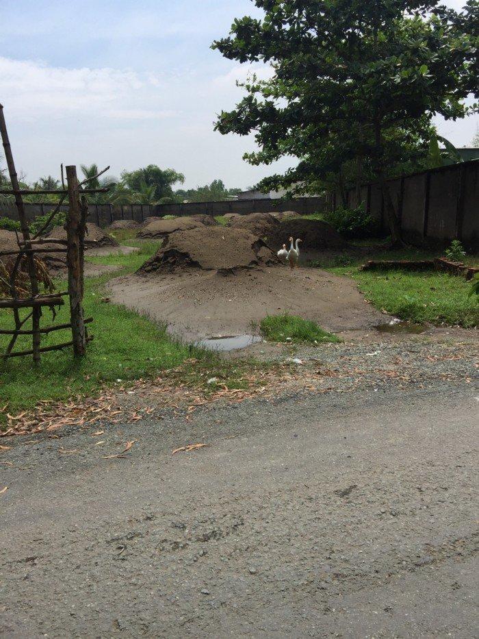 Chị 3 cần tiền bán gấp 115 m2 đất mặt tiền Tân Liễu, Hưng long, Bình Chánh, giá 800tr, chính chủ