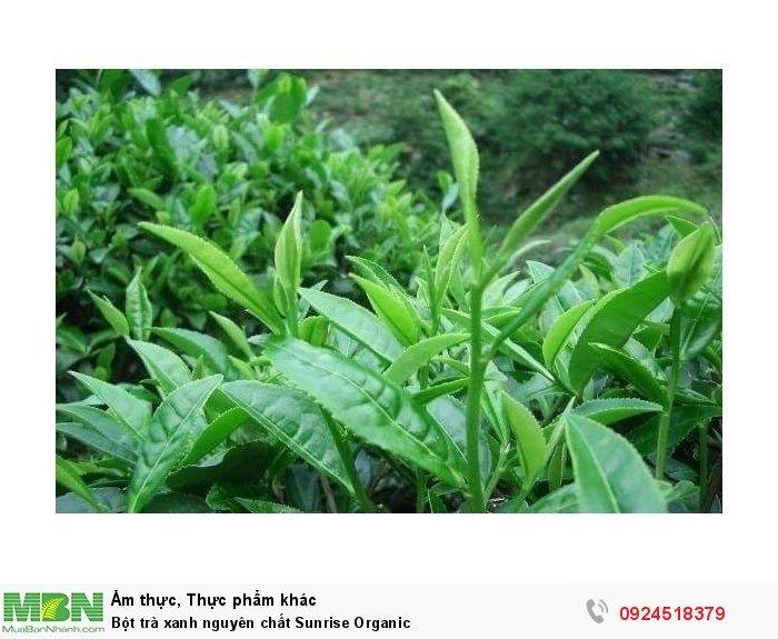 Bột trà xanh nguyên chất Sunrise Organic4