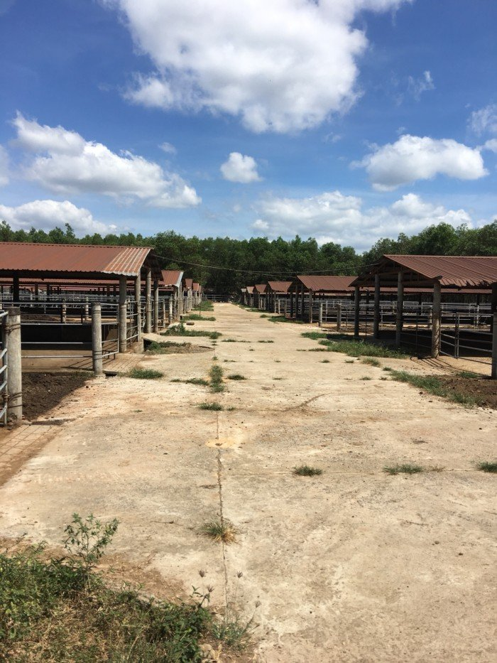 Cho thuê trang trại nuôi bò tại Đồng Nai
