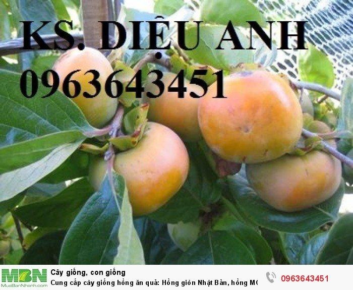 Cung cấp cây giống hồng ăn quả: Hồng giòn Nhật Bản, hồng MC1, Hồng quả vuông, hồng Nhật Bản Fuyu5