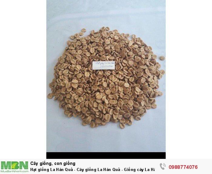 Hạt giống La Hán Quả - Cây giống La Hán Quả - Giống cây La Hán Quả3