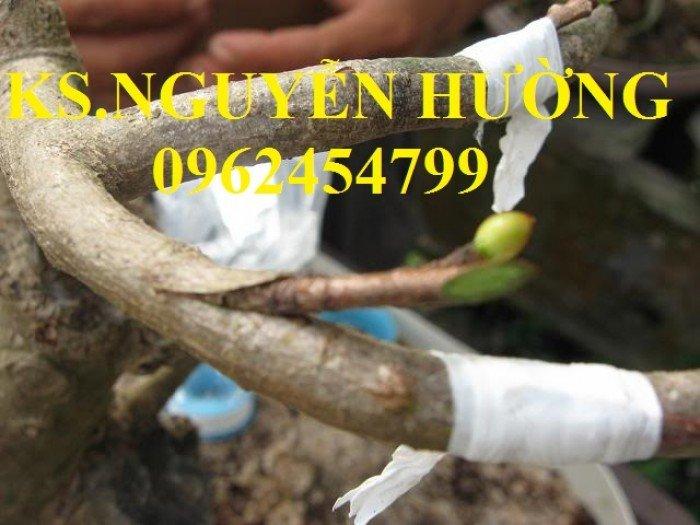 Cung cấp băng ghép cây tự hủy, dây ghép cây tự hủy, giao hàng toàn quốc2