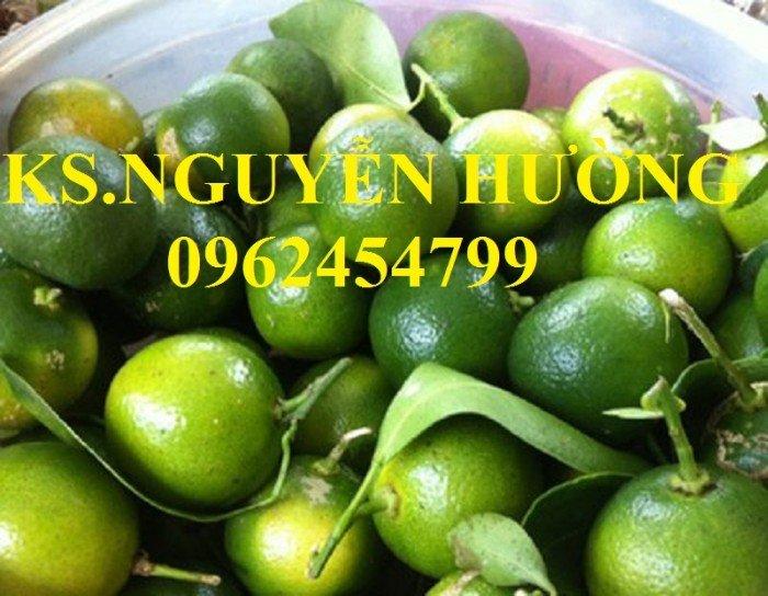 Cung cấp cây giống quất chua, quất ngọt, kỹ thuật trồng cây quất, giao cây toàn quốc22