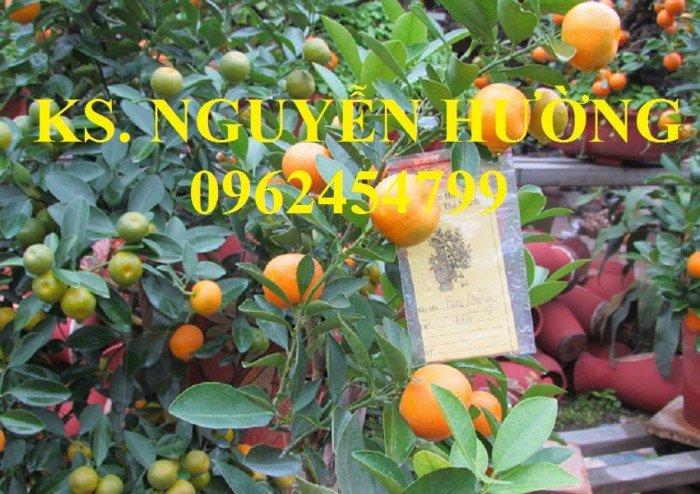 Cung cấp cây giống quất chua, quất ngọt, kỹ thuật trồng cây quất, giao cây toàn quốc12