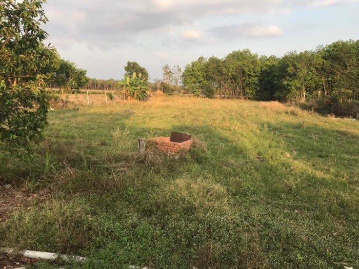 Bán đất MT Long Phước, Long Phước, Quận 9, DT 11.131m2