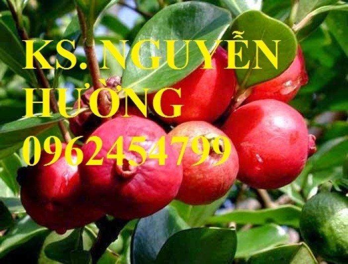 Cung cấp giống cây ổi tím, cây ổi đỏ và các loại giống cây ăn quả khác, giao cây toàn quốc3